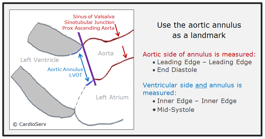 How to Master Aortic Measurements With These 5 Techniques