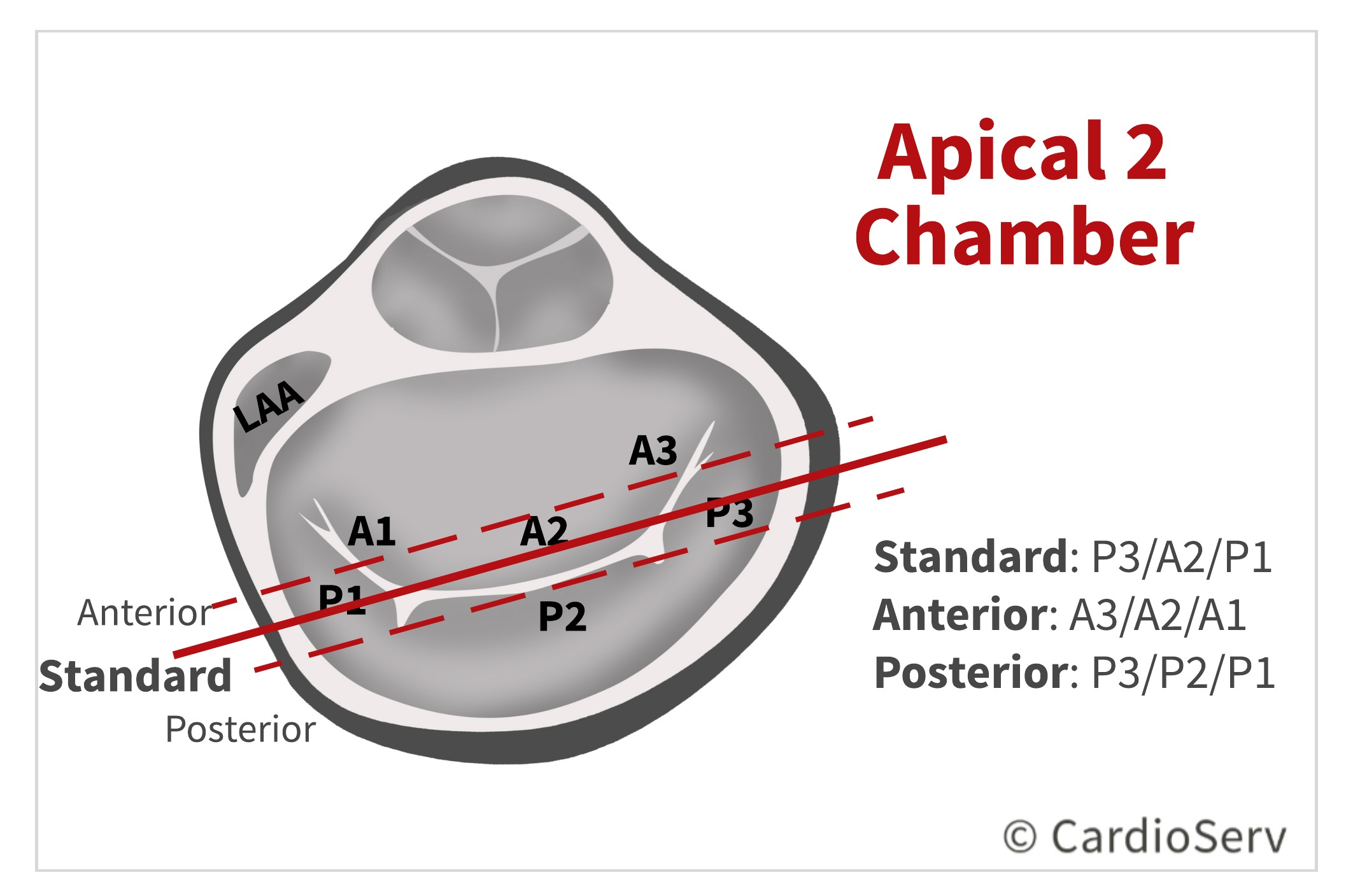 Apical 2 Chamber AP2 Mitral Valve Scallops Echo