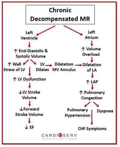 Chronic Decompensated Mitral Regurgitation Echo
