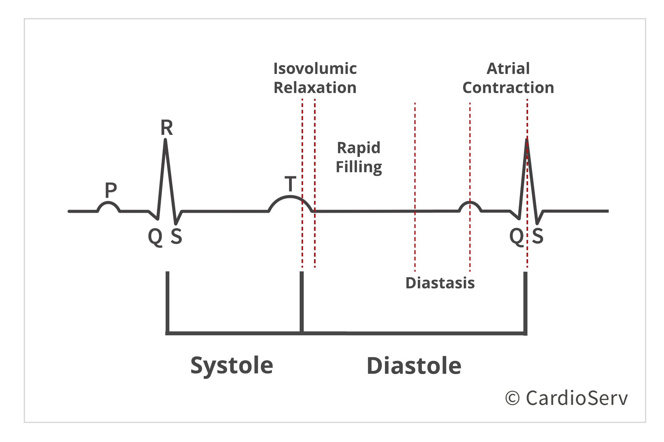 Stages of Diastole during cardiac cycle