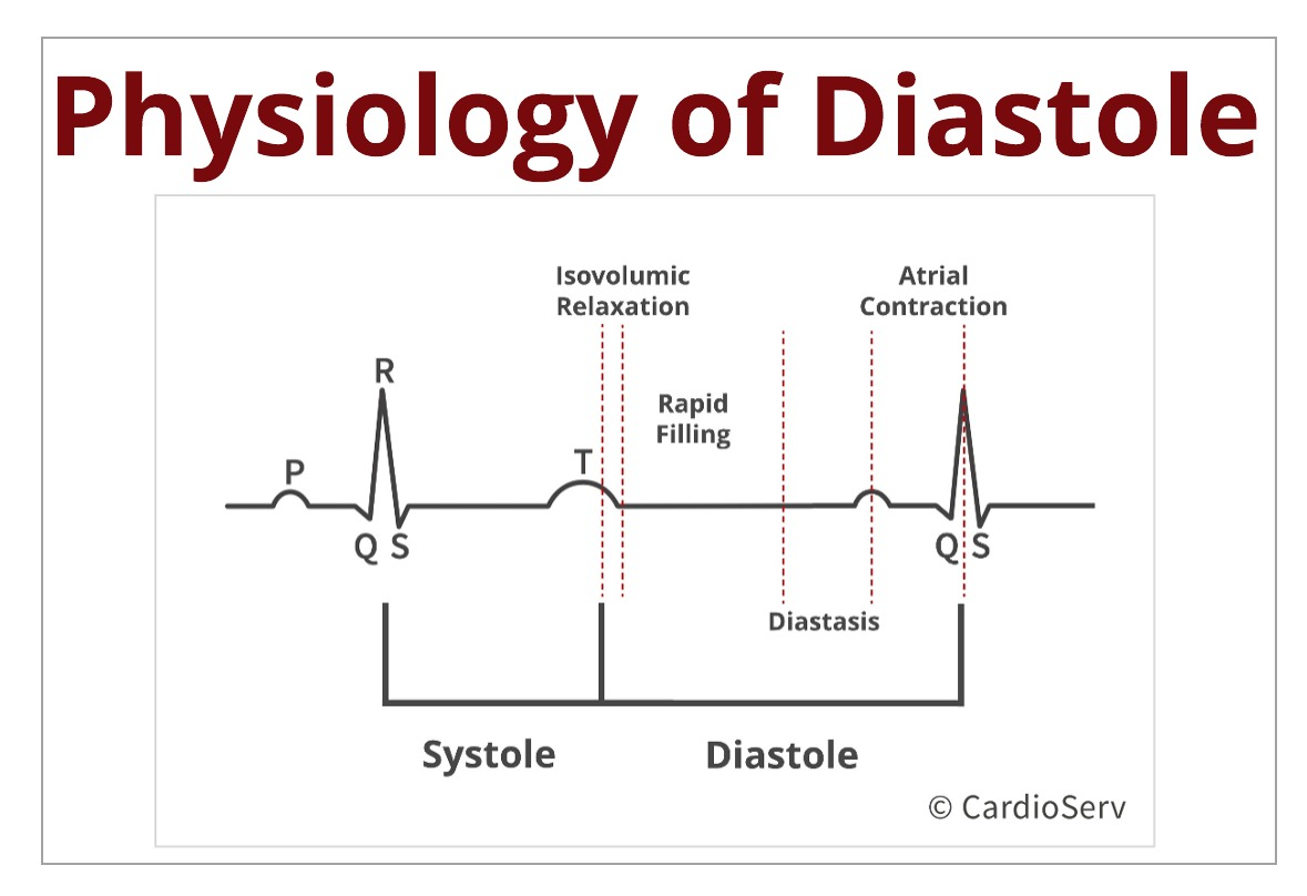 Understanding the Basics: Physiology of Diastole