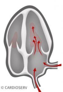 Diastole Physiology within Cardiac Cycle