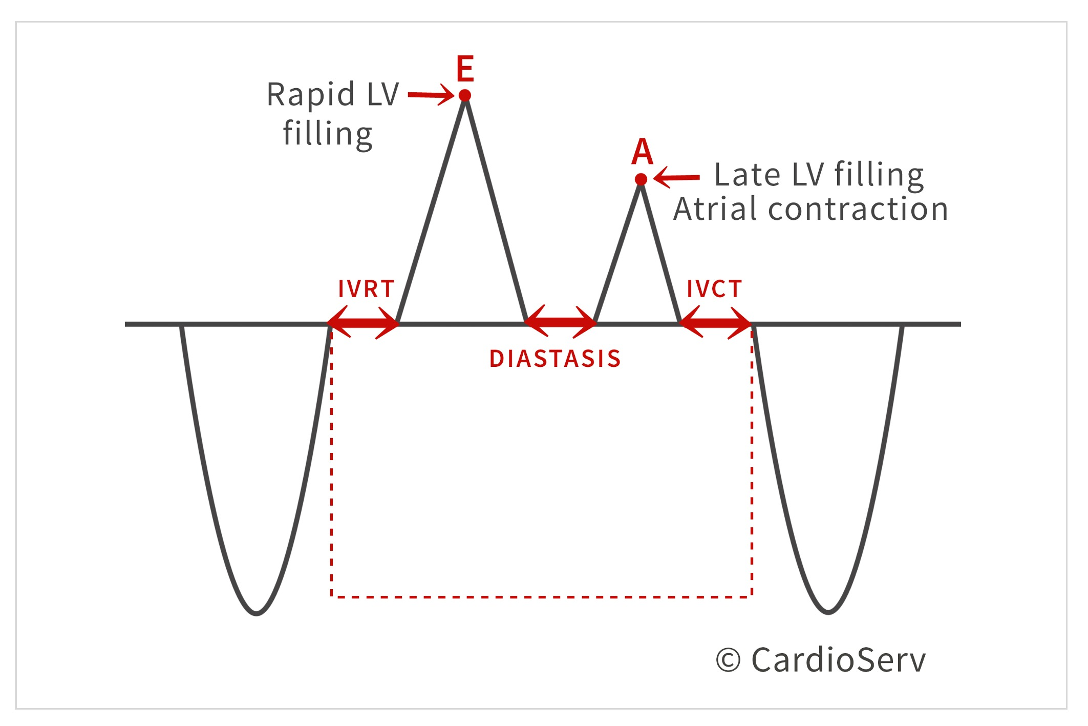 Cardiac Phases during diastole